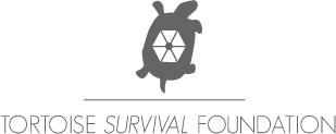 tortoise-logo